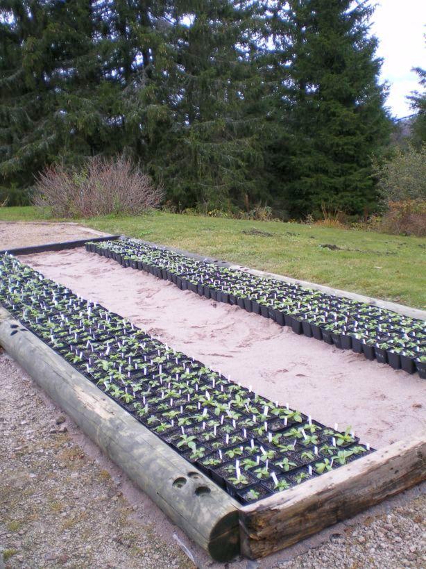 experimentation-of-transplantation-in-botanical-garden-of-haut-chitelet.jpg